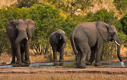 Safari Plan – Bigger, better and stronger!